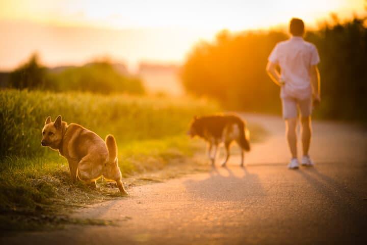 Mann beim Spaziergang mit Hunden | © panthermedia.net / lightpoet